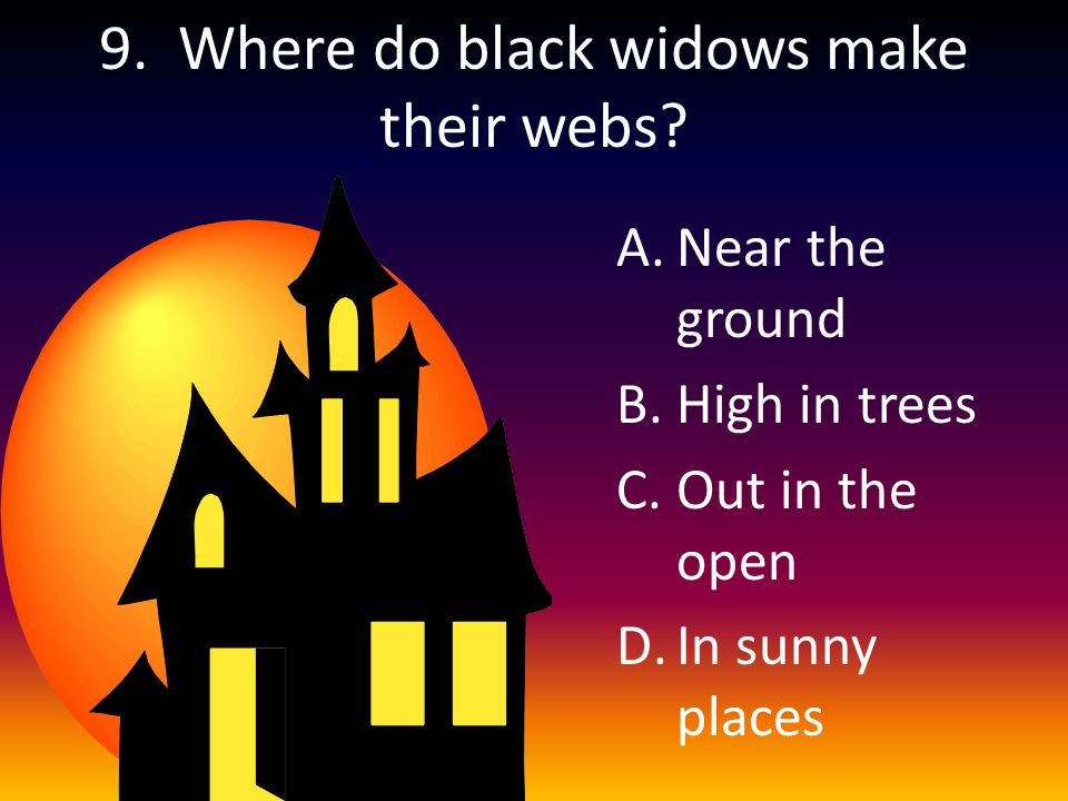 9. Where do black widows make their webs? A.Near the ground B.High in trees C.Out in the open D.In sunny places