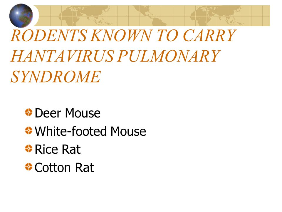 RODENTS KNOWN TO CARRY HANTAVIRUS PULMONARY SYNDROME Deer Mouse White-footed Mouse Rice Rat Cotton Rat