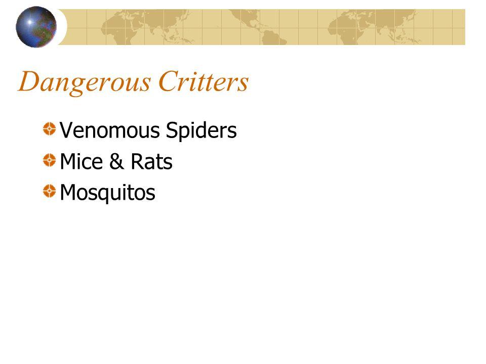 Dangerous Critters Venomous Spiders Mice & Rats Mosquitos