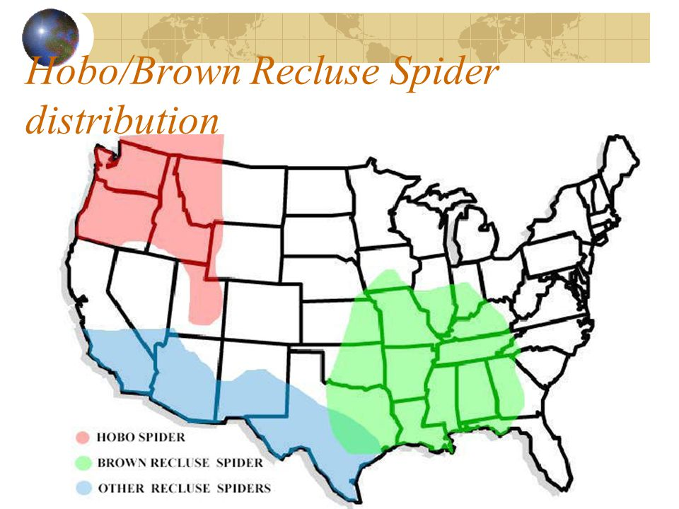 Hobo/Brown Recluse Spider distribution