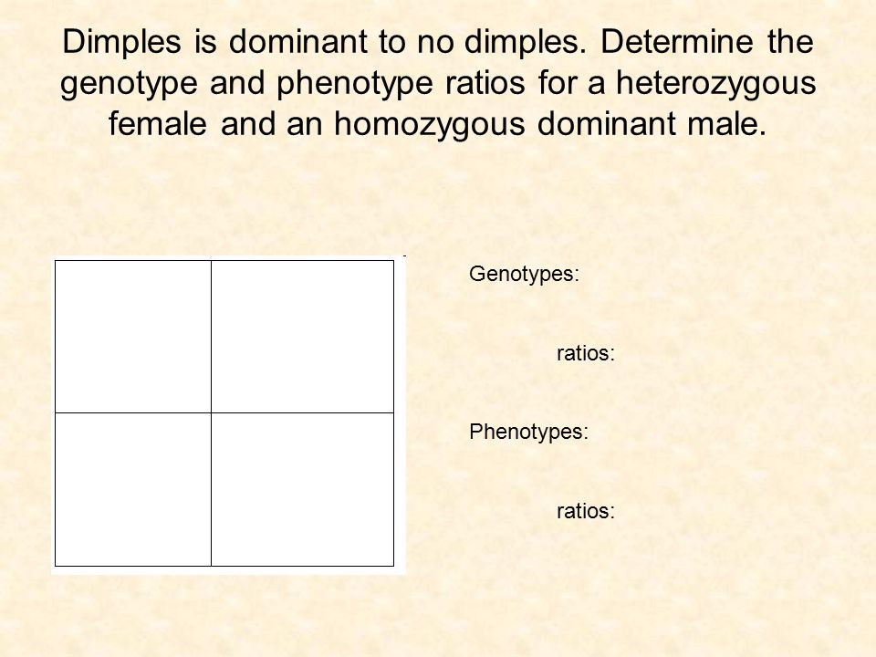 Dimples is dominant to no dimples. Determine the genotype and phenotype ratios for a heterozygous female and an homozygous dominant male. Genotypes: r