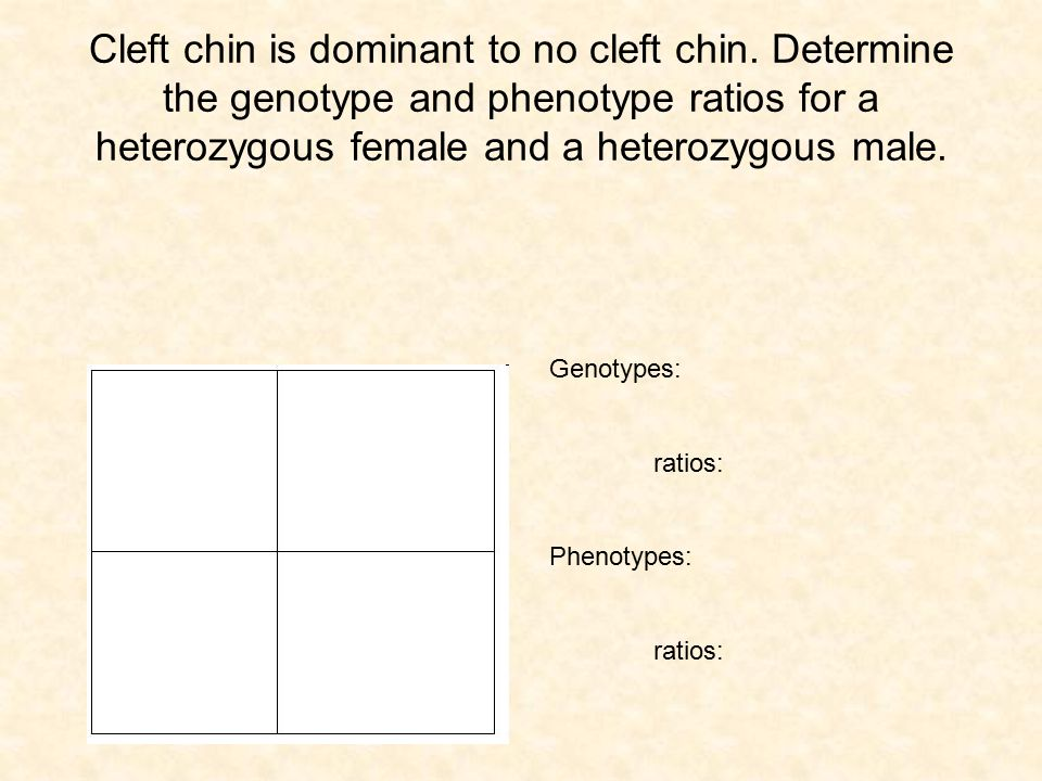 Cleft chin is dominant to no cleft chin. Determine the genotype and phenotype ratios for a heterozygous female and a heterozygous male. Genotypes: rat