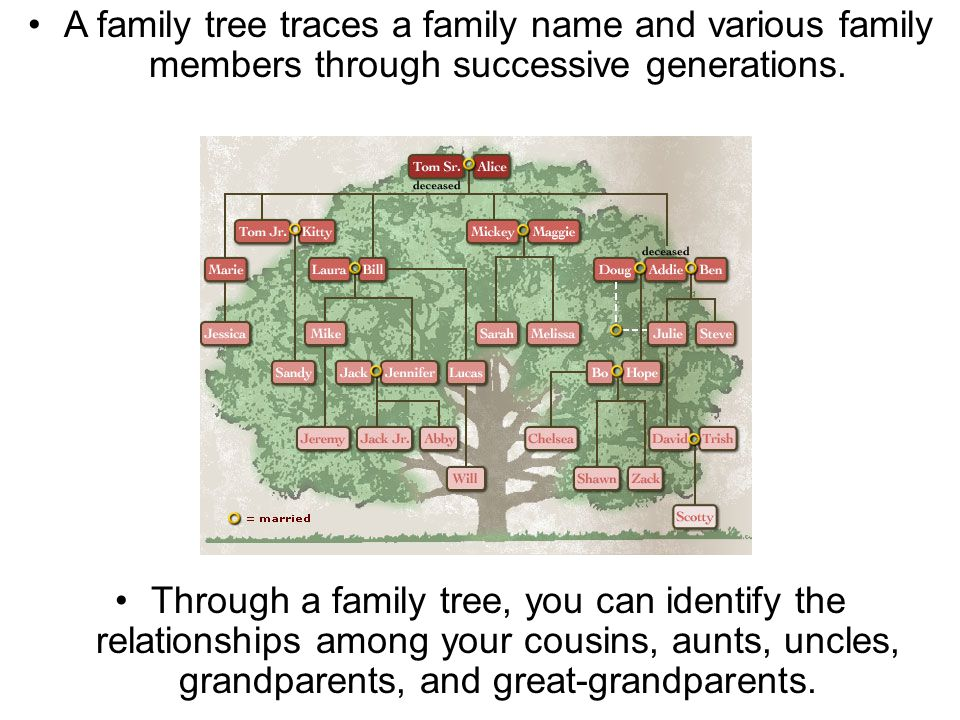 Section 12.1 Summary – pages 309 - 314 A family tree traces a family name and various family members through successive generations.