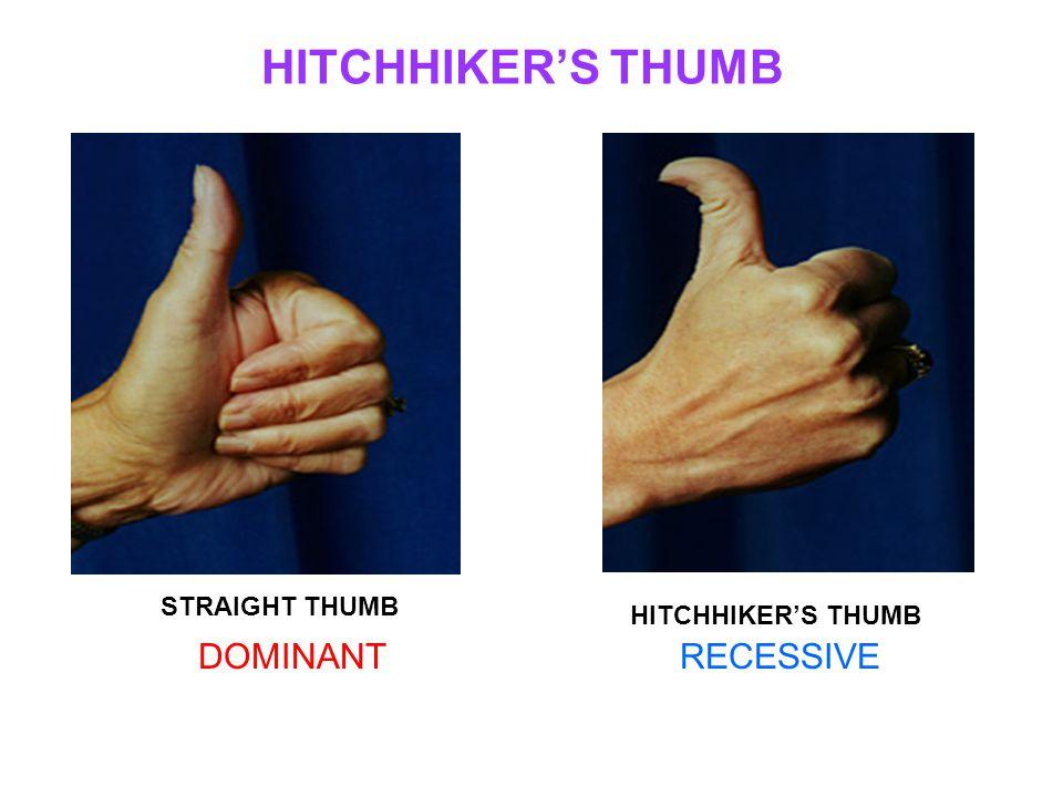 HITCHHIKER'S THUMB STRAIGHT THUMB HITCHHIKER'S THUMB DOMINANTRECESSIVE