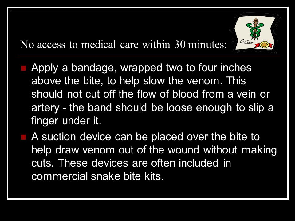 No access to medical care within 30 minutes: Apply a bandage, wrapped two to four inches above the bite, to help slow the venom. This should not cut o