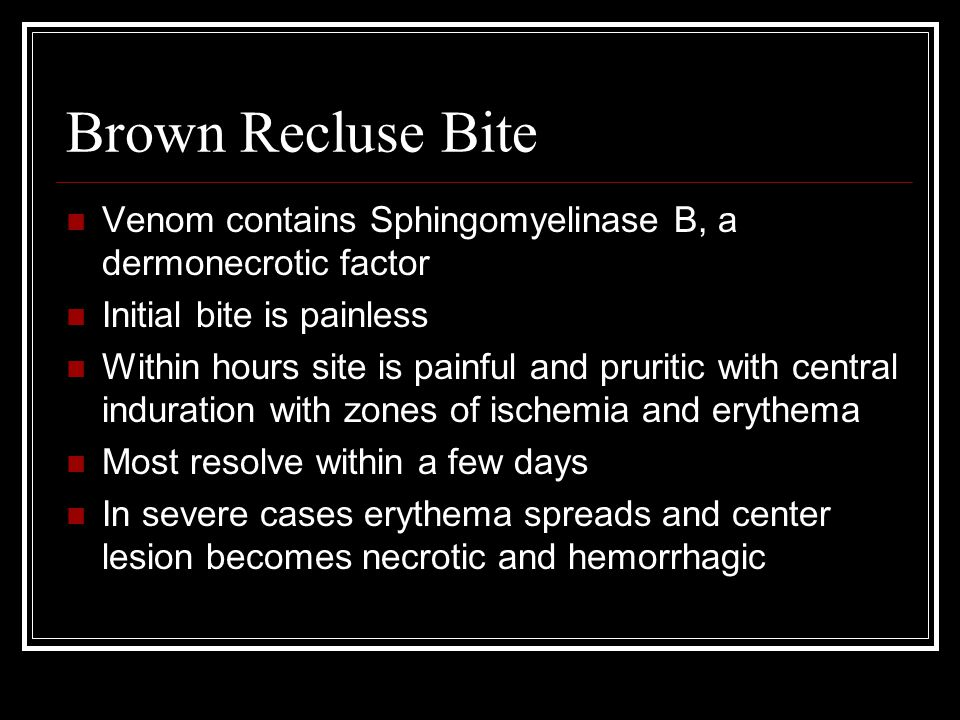Brown Recluse Bite Venom contains Sphingomyelinase B, a dermonecrotic factor Initial bite is painless Within hours site is painful and pruritic with central induration with zones of ischemia and erythema Most resolve within a few days In severe cases erythema spreads and center lesion becomes necrotic and hemorrhagic