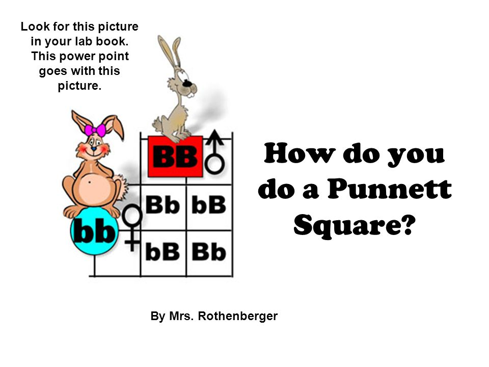 How do you do a Punnett Square. By Mrs. Rothenberger Look for this picture in your lab book.