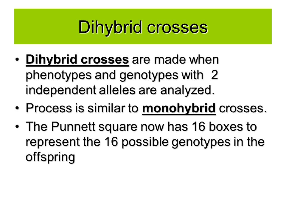 Dihybrid crosses Dihybrid crosses are made when phenotypes and genotypes with 2 independent alleles are analyzed.Dihybrid crosses are made when phenotypes and genotypes with 2 independent alleles are analyzed.