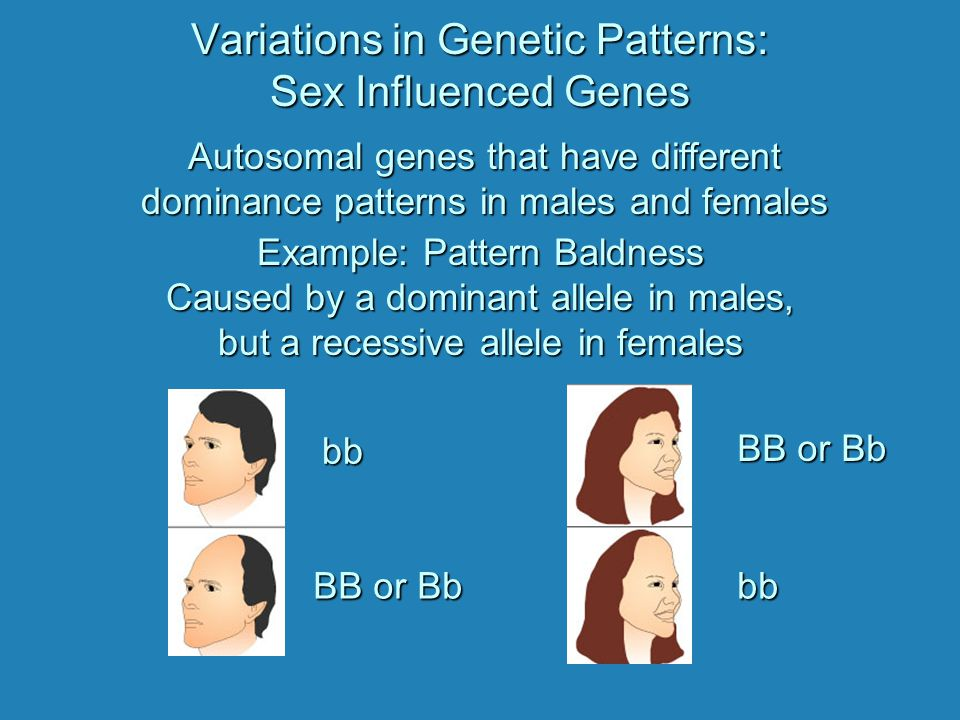 Variations in Genetic Patterns: Sex Influenced Genes Autosomal genes that have different dominance patterns in males and females Example: Pattern Baldness Caused by a dominant allele in males, but a recessive allele in females bb BB or Bb bb
