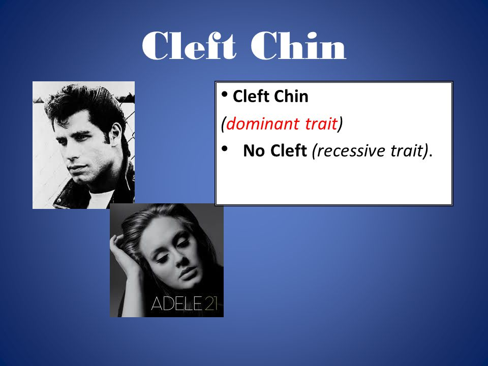 Cleft Chin (dominant trait) No Cleft (recessive trait).