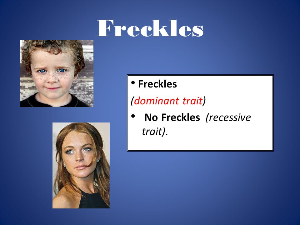 Freckles (dominant trait) No Freckles (recessive trait).