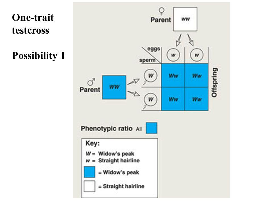 One-trait testcross Possibility I