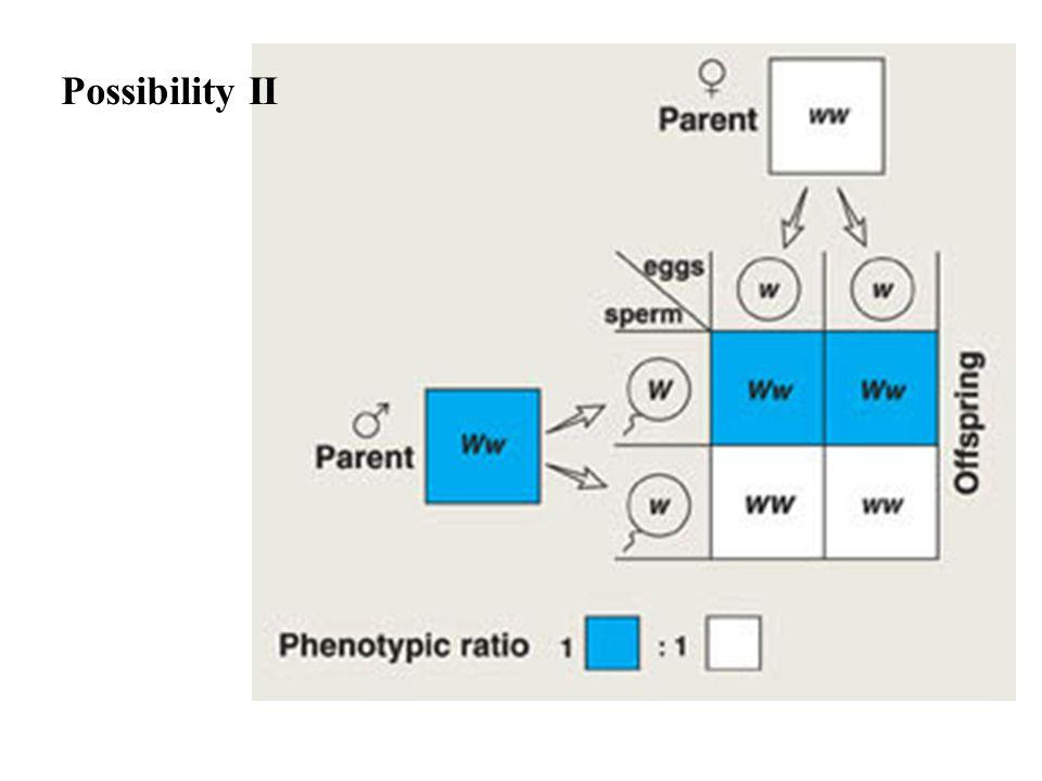 Possibility II