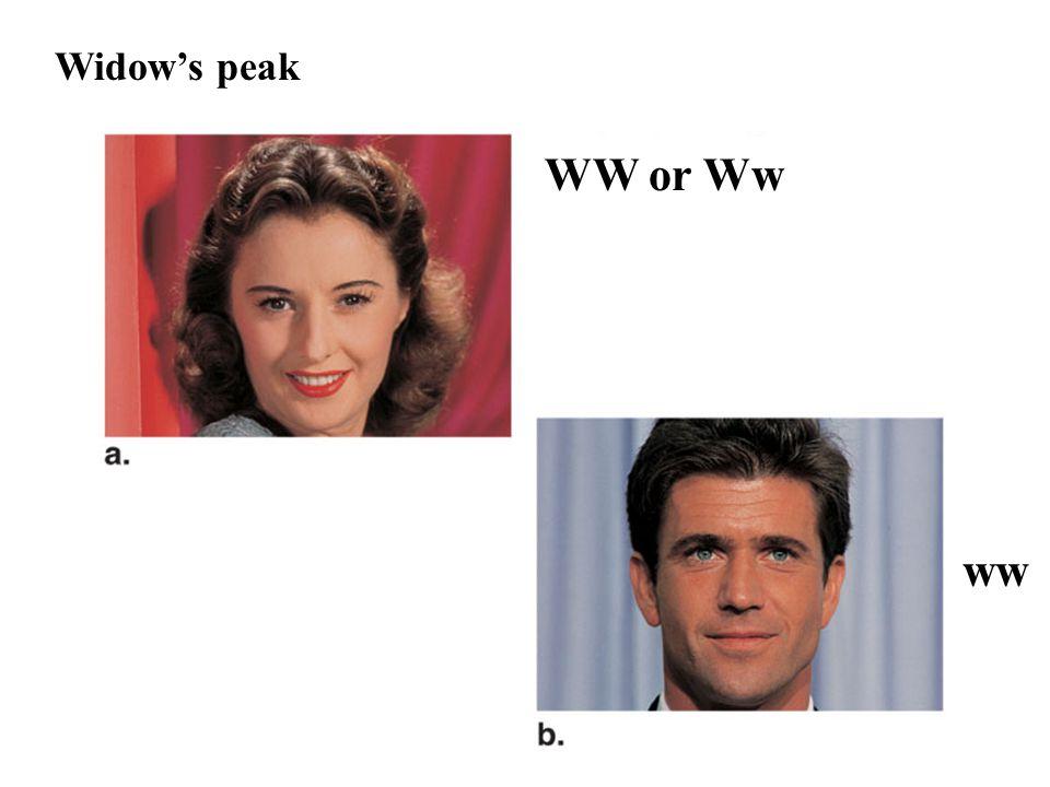 Widow's peak WW or Ww ww