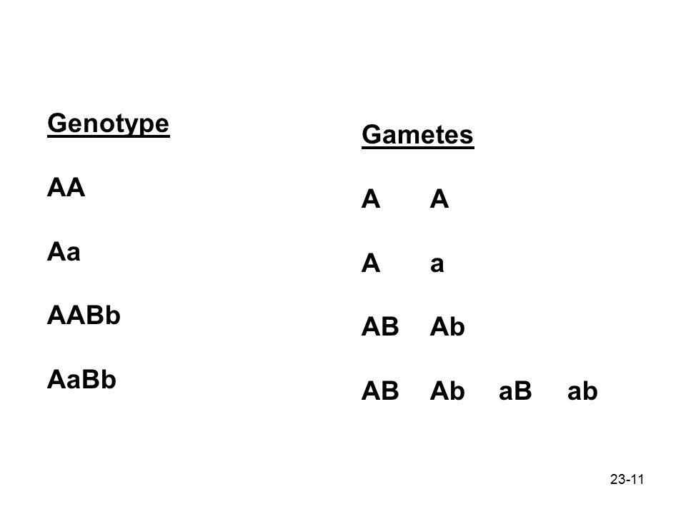 23-11 Genotype AA Aa AABb AaBb GametesA Aa ABAb ABAbaBab