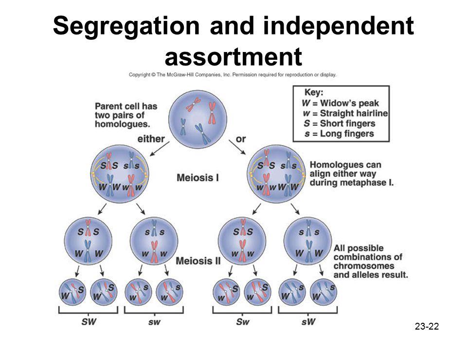 23-22 Segregation and independent assortment