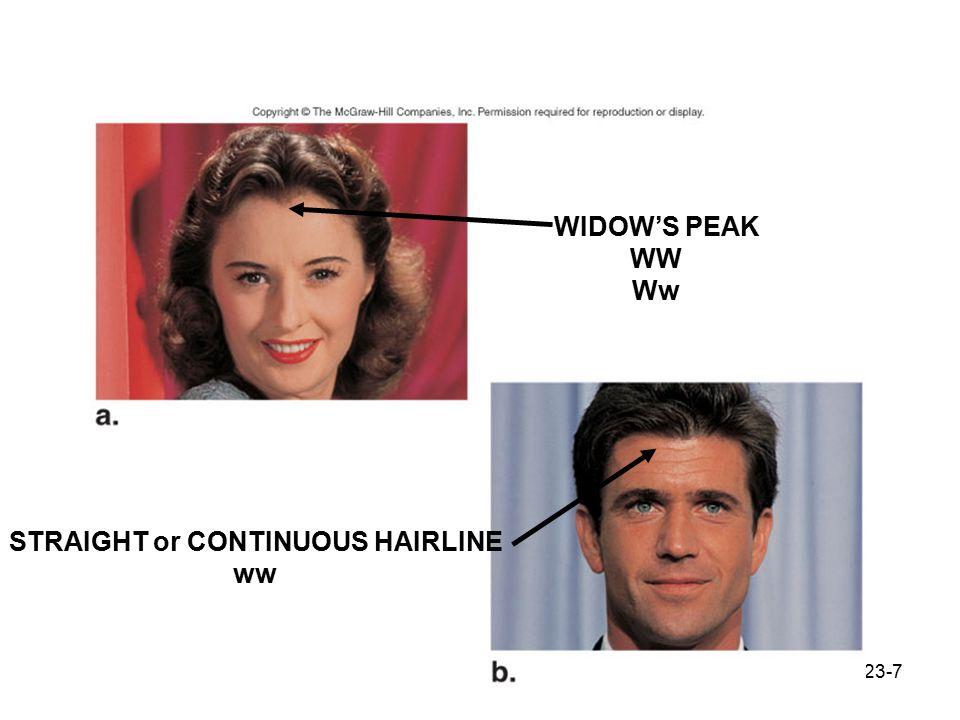 23-7 Widow's peak WIDOW'S PEAK WW Ww STRAIGHT or CONTINUOUS HAIRLINE ww
