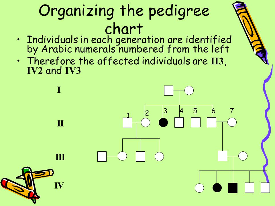 Organizing the pedigree chart Individuals in each generation are identified by Arabic numerals numbered from the left Therefore the affected individua