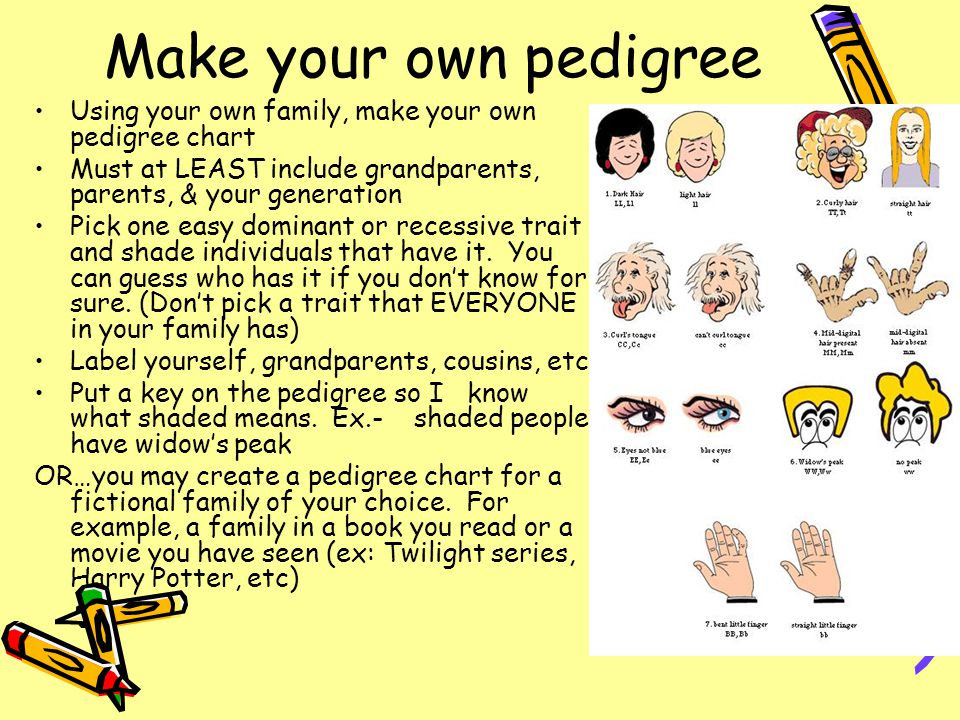 Make your own pedigree Using your own family, make your own pedigree chart Must at LEAST include grandparents, parents, & your generation Pick one eas