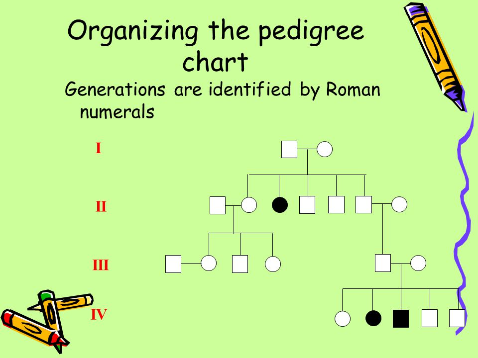 Generations are identified by Roman numerals Organizing the pedigree chart I II III IV