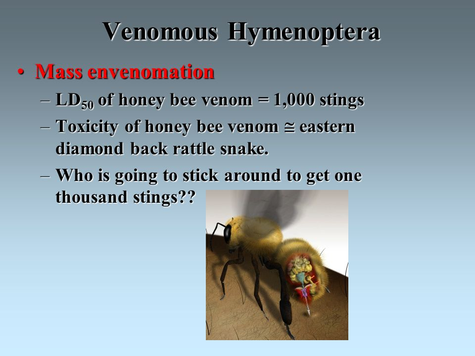 Venomous Hymenoptera Mass envenomationMass envenomation –LD 50 of honey bee venom = 1,000 stings –Toxicity of honey bee venom  eastern diamond back rattle snake.