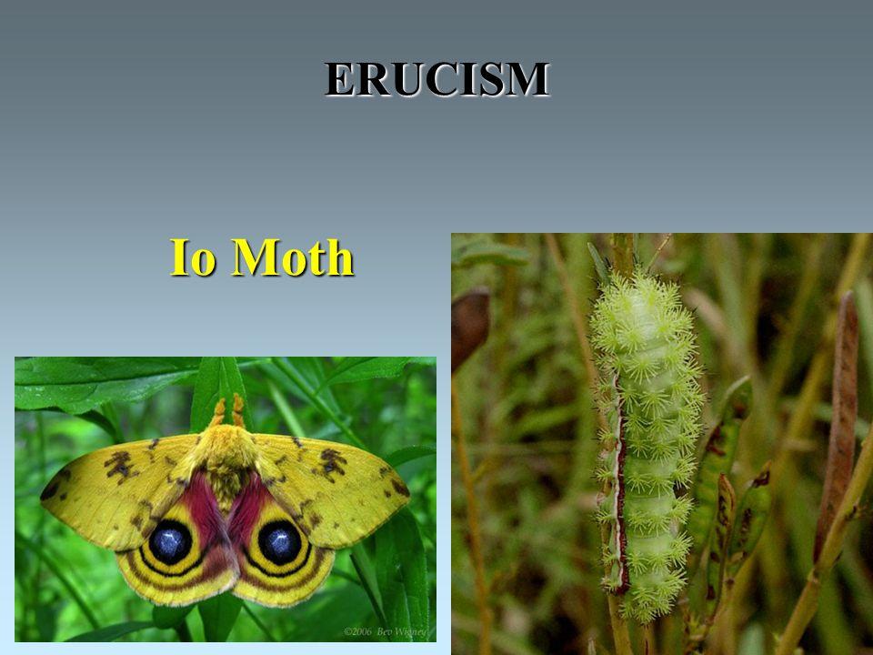 ERUCISM Io Moth