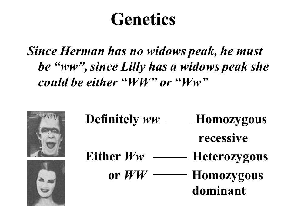 "Genetics Since Herman has no widows peak, he must be ""ww"", since Lilly has a widows peak she could be either ""WW"" or ""Ww"" Definitely ww Homozygous rec"