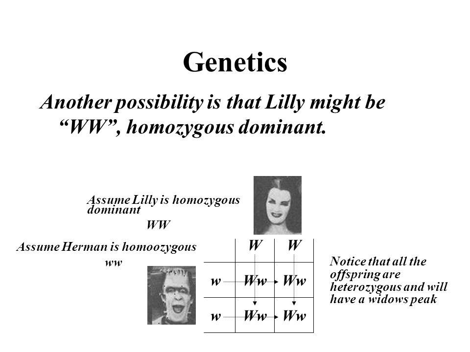 """Genetics Another possibility is that Lilly might be """"WW"""", homozygous dominant. Ww w w WW Assume Lilly is homozygous dominant WW Assume Herman is homoo"""