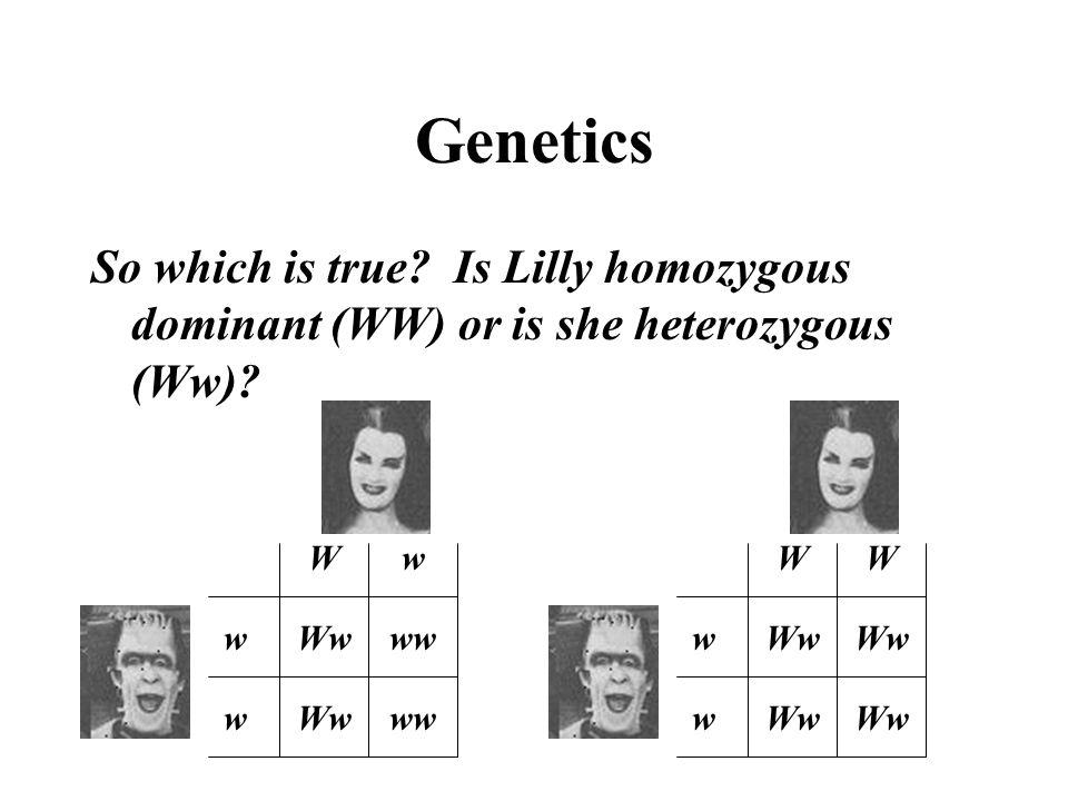 Genetics So which is true? Is Lilly homozygous dominant (WW) or is she heterozygous (Ww)? Ww w w WW ww Wwww w w Ww