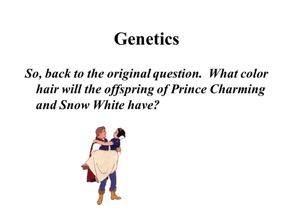 Genetics So, back to the original question. What color hair will the offspring of Prince Charming and Snow White have?