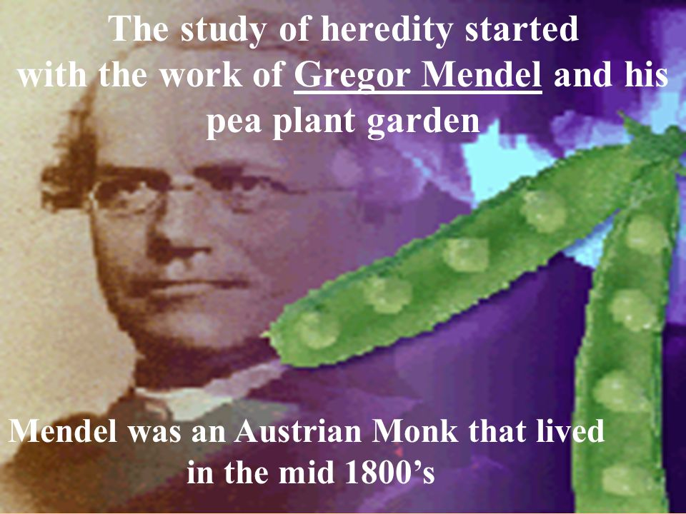 The study of heredity started with the work of Gregor Mendel and his pea plant garden Mendel was an Austrian Monk that lived in the mid 1800's