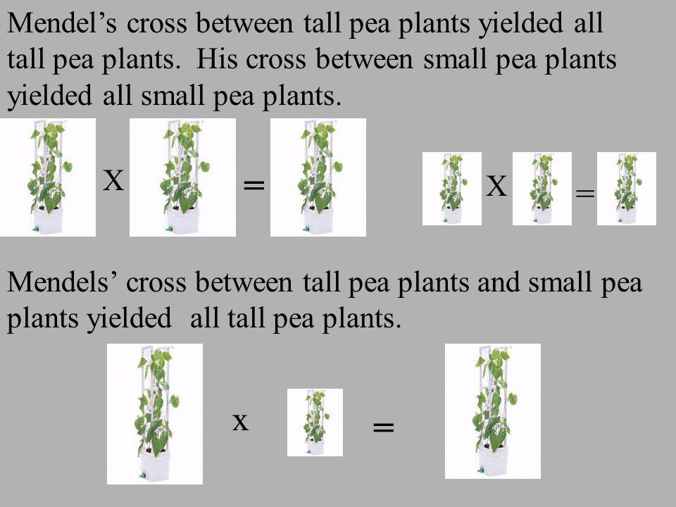 Mendel's cross between tall pea plants yielded all tall pea plants. His cross between small pea plants yielded all small pea plants. Mendels' cross be