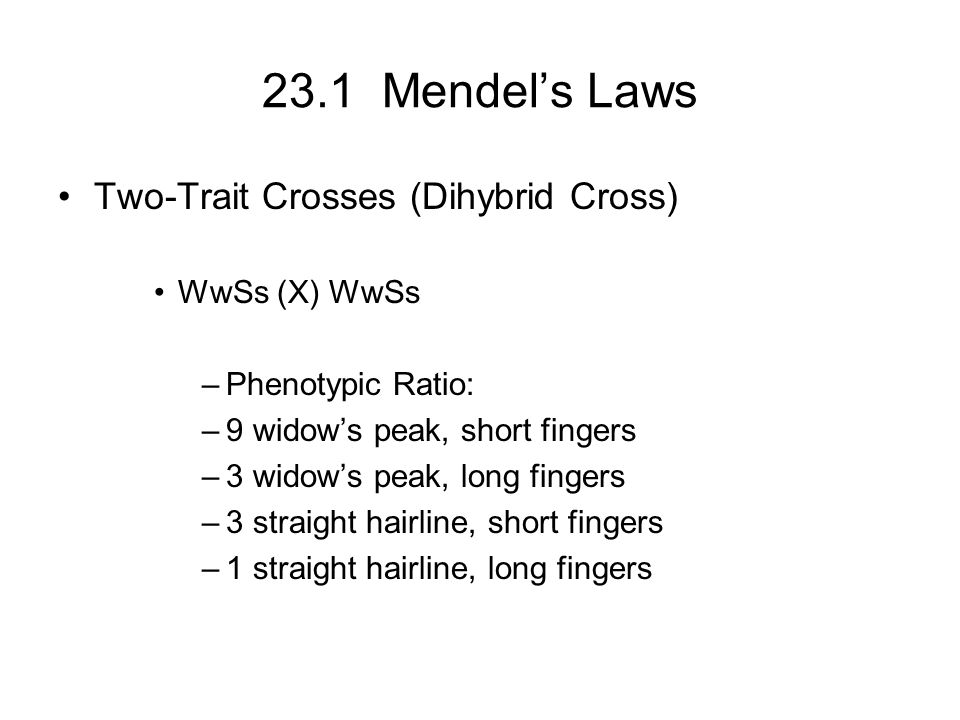 23.1 Mendel's Laws Two-Trait Crosses (Dihybrid Cross) WwSs (X) WwSs –Phenotypic Ratio: –9 widow's peak, short fingers –3 widow's peak, long fingers –3