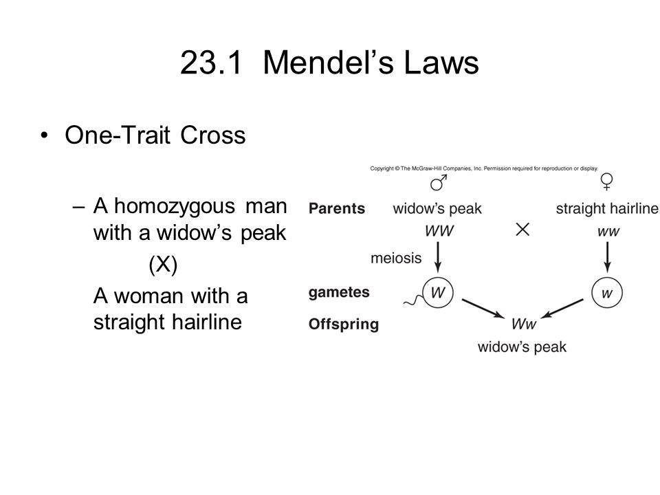 23.2 Beyond Simple Inheritance Patterns Practice Problems –A woman is colorblind.