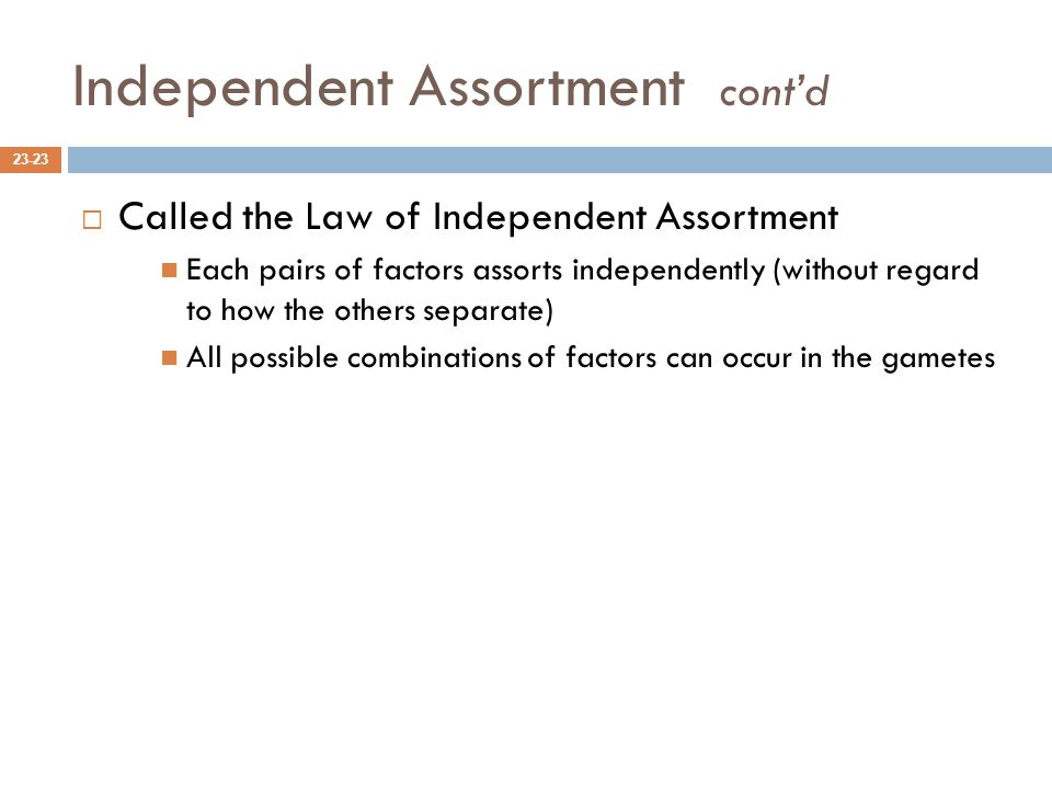Independent Assortment cont'd  Called the Law of Independent Assortment Each pairs of factors assorts independently (without regard to how the others separate) All possible combinations of factors can occur in the gametes 23-23