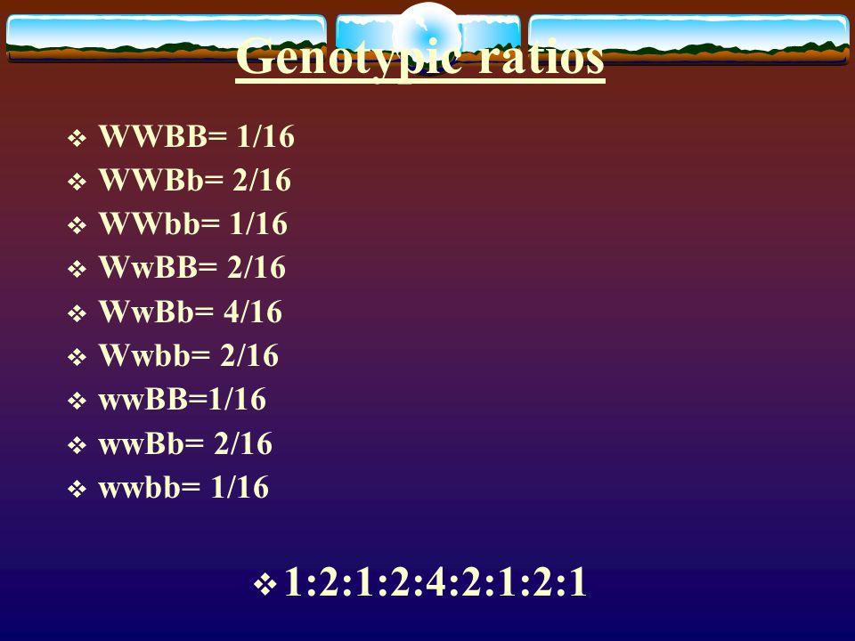 Genotypic ratios  WWBB= 1/16  WWBb= 2/16  WWbb= 1/16  WwBB= 2/16  WwBb= 4/16  Wwbb= 2/16  wwBB=1/16  wwBb= 2/16  wwbb= 1/16  1:2:1:2:4:2:1:2:1