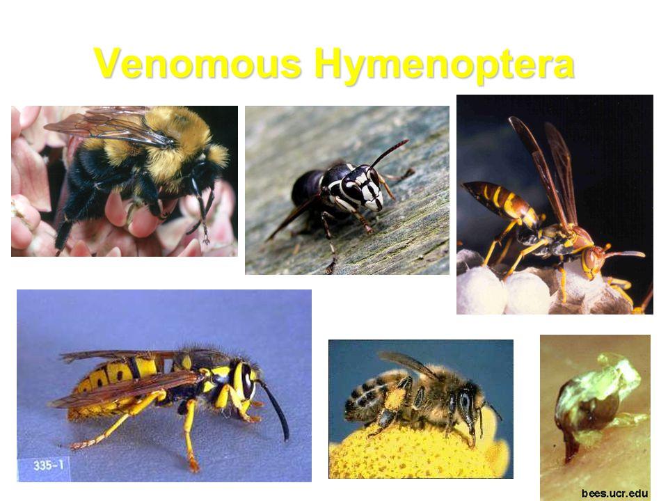 Venomous Hymenoptera