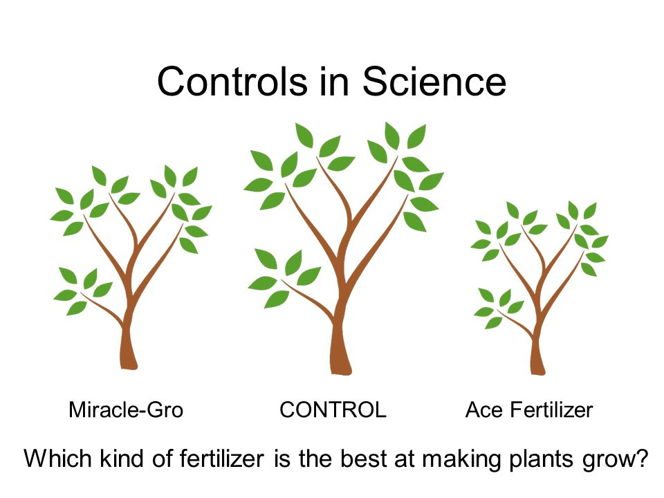 Controls in Science Miracle-Gro CONTROL Ace Fertilizer Which kind of fertilizer is the best at making plants grow