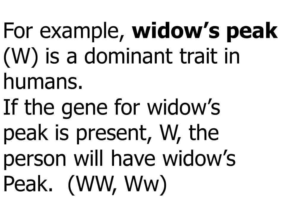 For example, widow's peak (W) is a dominant trait in humans. If the gene for widow's peak is present, W, the person will have widow's Peak. (WW, Ww)