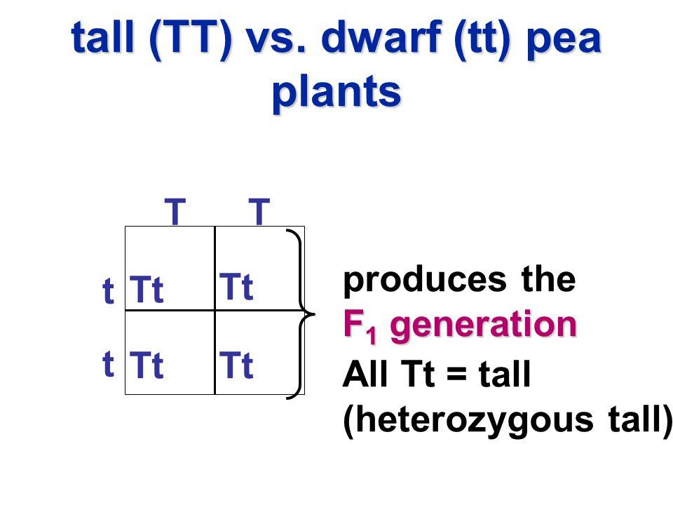 tall (TT) vs. dwarf (tt) pea plants t t TT Tt All Tt = tall (heterozygous tall) produces the F 1 generation