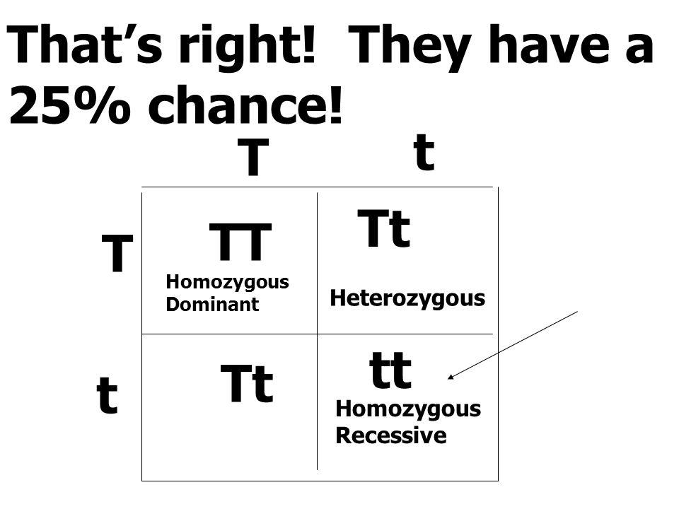 That's right! They have a 25% chance! T t T t TT Tt tt Homozygous Dominant Heterozygous Homozygous Recessive