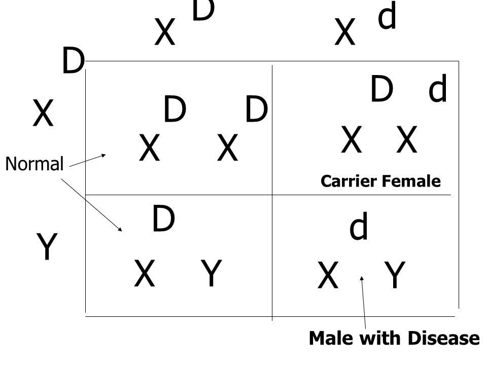 X Y D X D D d X D d X Y D d Male with Disease Carrier Female Normal