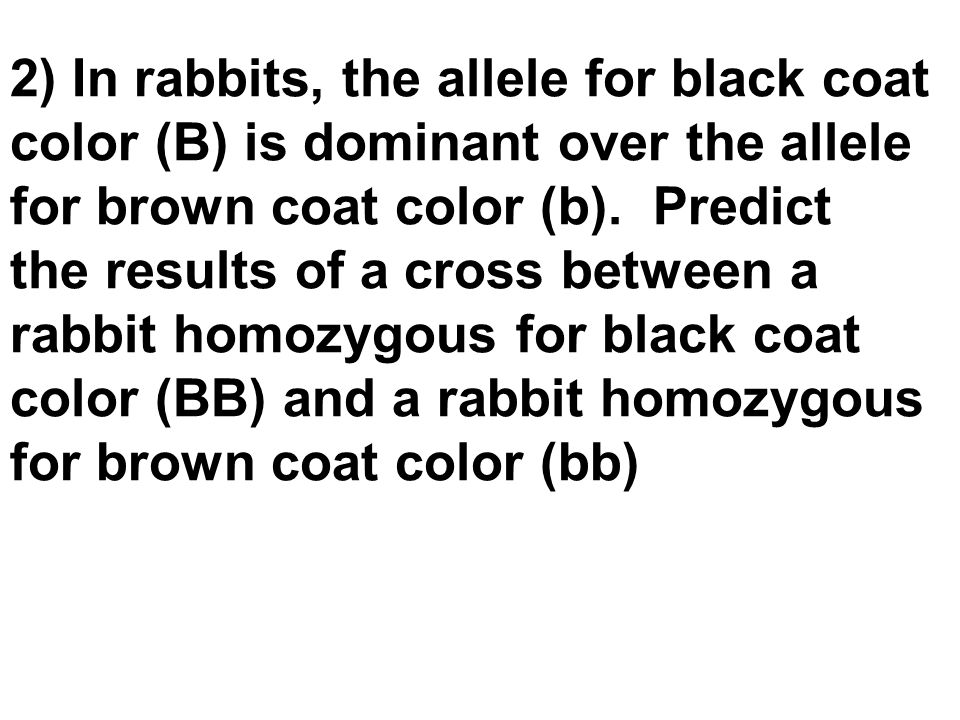 2) In rabbits, the allele for black coat color (B) is dominant over the allele for brown coat color (b). Predict the results of a cross between a rabb