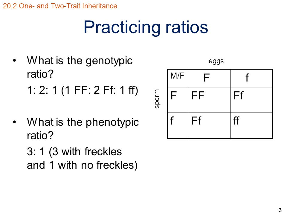 3 Practicing ratios What is the genotypic ratio.