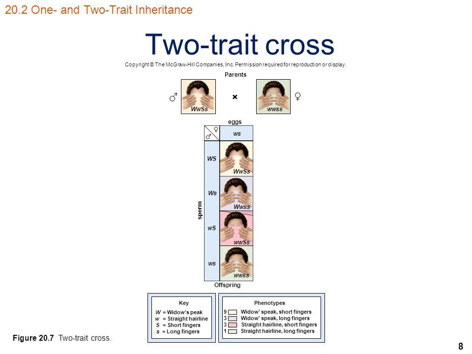 9 Phenotypic ratios of common crosses Table 20.1 Phenotypic ratios of common crosses 20.2 One- and Two-Trait Inheritance