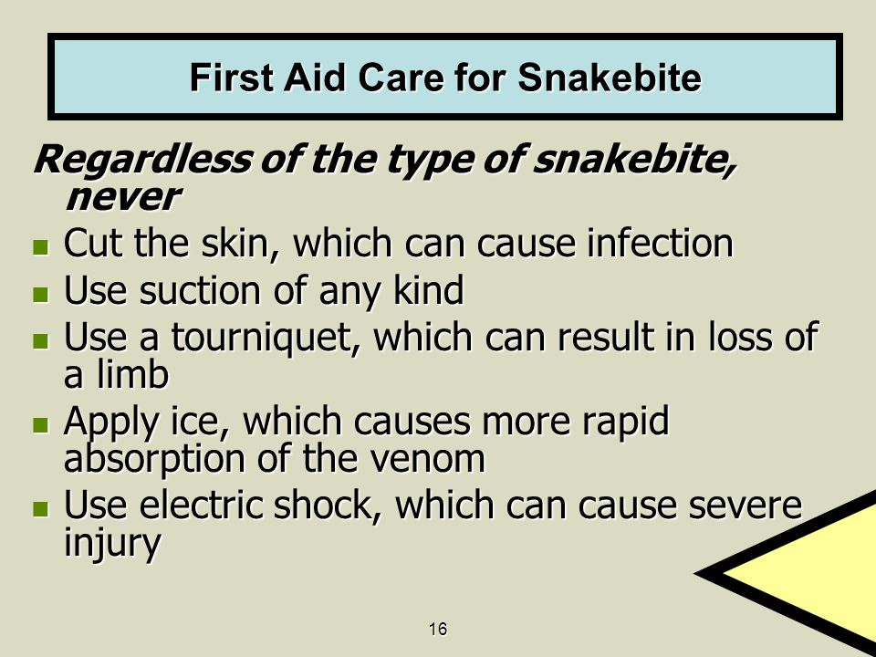 16 First Aid Care for Snakebite Regardless of the type of snakebite, never Cut the skin, which can cause infection Cut the skin, which can cause infec