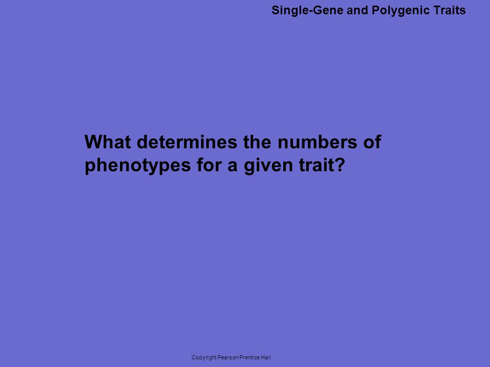 Copyright Pearson Prentice Hall What determines the numbers of phenotypes for a given trait? Single-Gene and Polygenic Traits