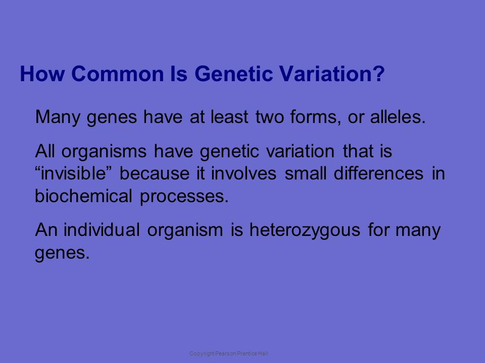 Copyright Pearson Prentice Hall Variation and Gene Pools Genetic variation is studied in populations.