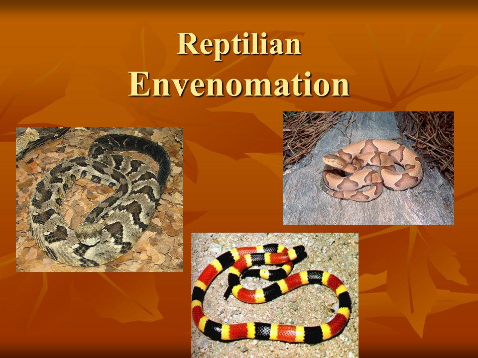 Reptilian Envenomation