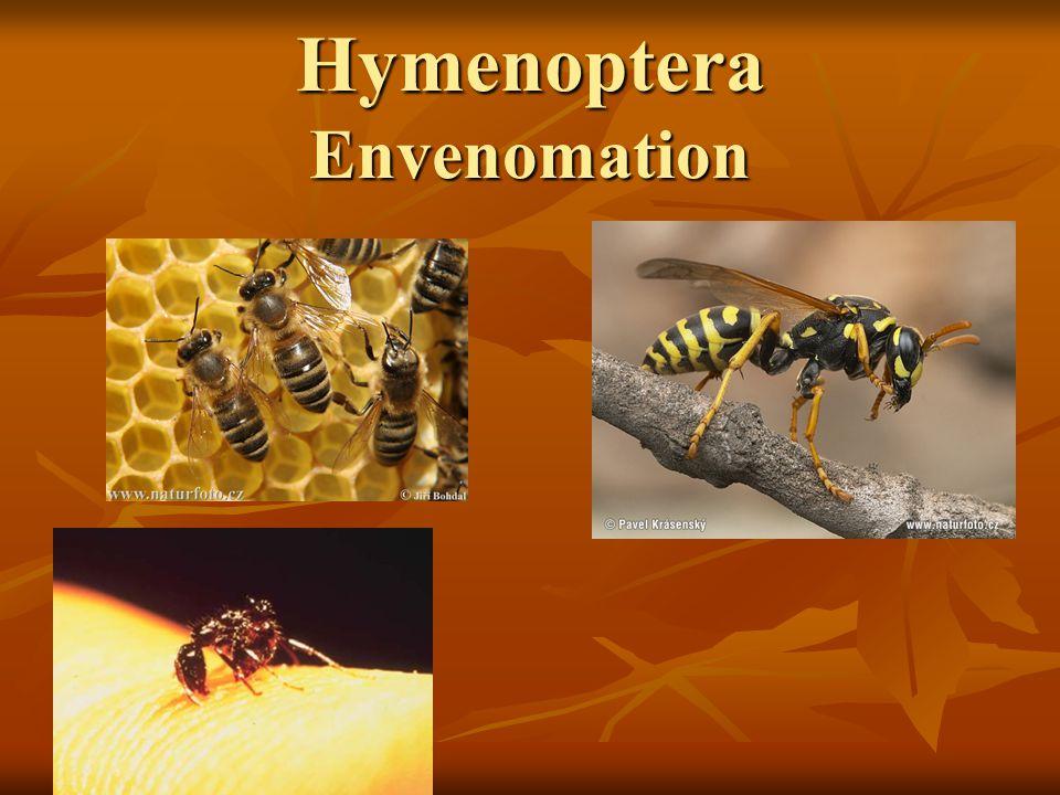 Hymenoptera Envenomation